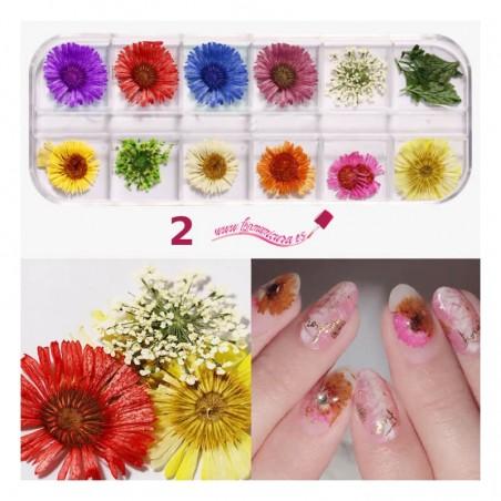 Kits de flores secas para uñas 2